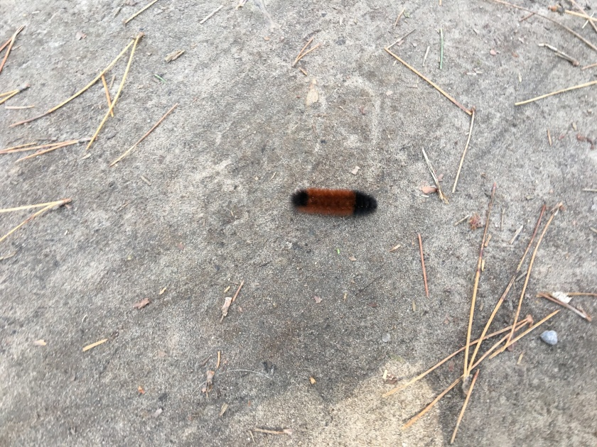 photo of insect on ground